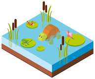 3D design for animals in the pond. Illustration Stock Photography