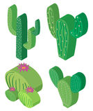 3D design for cactus plants. Illustration Stock Images