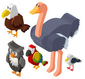 3D design for different types of birds Stock Image