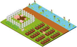 3D design for garden scene with pigs and carrots Royalty Free Stock Image