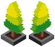 3D design for pine tree. Illustration Stock Photography