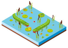 3D design for pond scene with two crocodiles Royalty Free Stock Photography