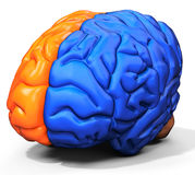 3d detailed brain sides Royalty Free Stock Image