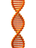 3d DNA helix Royalty Free Stock Images