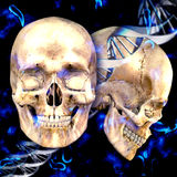 3d dna medical background with skulls and virus cells.  Royalty Free Stock Photo