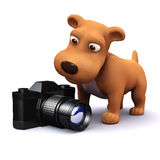 3d Dog finds a camera Stock Photo
