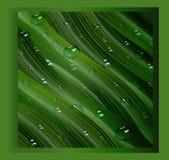 3d, dreidimensionale Wassertropfen und dreidimensionale, grüne Blätter im Stil des Realismus ein realistischer Hintergrund, drei lizenzfreie abbildung