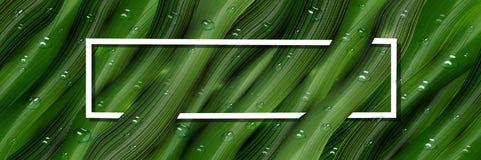 3d, dreidimensionale Wassertropfen und dreidimensionale, gr?ne Bl?tter im Stil des Realismus realistische tropische Fahne, Netz stock abbildung