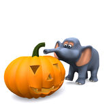 3d Elephant has carved a Halloween pumpkin Royalty Free Stock Photos