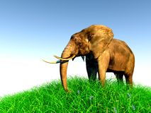 3d elephant in nature. 3d african elephant standing in the green grass with blue sky as a background Stock Images