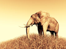 3d elephant in nature. 3d african elephant standing in the green grass with blue sky as a background Royalty Free Stock Photography