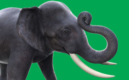 3D elephants. On green background Stock Image