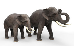 3D elephants. Standing  on white background Royalty Free Stock Photos