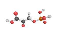 3d estrutura do ácido de Phosphohydroxypyruvic, um intermediário em t fotografia de stock