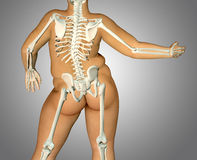 3d fat back body anatomy with skeleton Royalty Free Stock Image