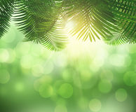 3D fern leaves and sunlight. 3D render of the sun shining through fern leaves on a bokeh background Royalty Free Stock Photos