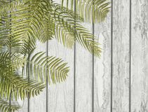 3D fern leaves on a white wooden texture. 3D render of fern leaves on a white wooden texture Royalty Free Stock Photo