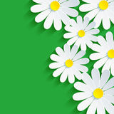 3d flower chamomile, spring background abstract. Floral vector green background. Vector illustration Stock Photo