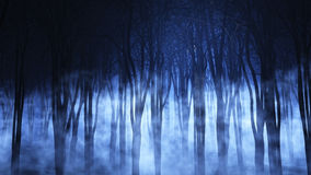 3D foggy forest Royalty Free Stock Image