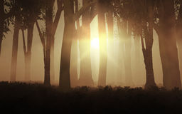 3D foggy forest Royalty Free Stock Photography