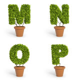 3D font pot plants Stock Photography