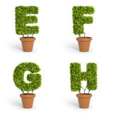 3D font pot plants Royalty Free Stock Photo
