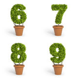 3D font pot plants Royalty Free Stock Image