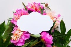 3 d formie ram trzy piękne wymiarowej ilustracji bardzo roczne Różowe peonie na białym tle Fotografia Royalty Free