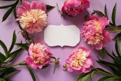3 d formie ram trzy piękne wymiarowej ilustracji bardzo roczne Różowe peonie na purpurowym tle Zdjęcie Stock
