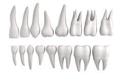 3d framför av mänskliga tänder stock illustrationer