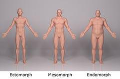 3D framför: illustration av manlig kroppstyp, främre sida vektor illustrationer