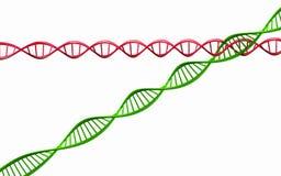 3d framför, modellen av vridna den isolerade DNAkedjan. Arkivfoto