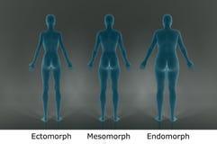 3D framför: olik kroppstyp av illustrationen för kvinnlig kropp med blåtttextur stock illustrationer
