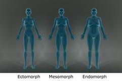 3D framför: 3 olika illustrationer för kvinnlig kropp med blått färgar textur royaltyfri illustrationer