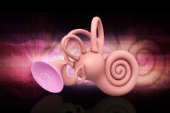 3d framförde cochleaen för det inre örat på färgbakgrund arkivbild
