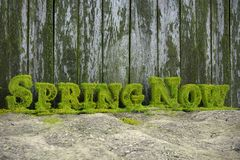 3D Fresh Spring Now text vector illustration