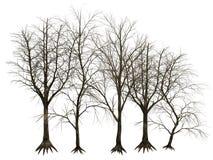 3D geïsoleerde bomen Stock Afbeelding