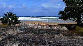 3D geanimeerde lanscape mening 25 bij het overzeese kust en regen vallen royalty-vrije illustratie