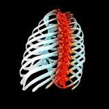 3d geef illustratie van pijnlijke rug terug stock fotografie