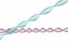 3d geef terug, geïsoleerd Model van verdraaide DNA-ketting. Royalty-vrije Stock Foto's