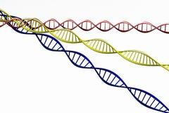 3d geef terug, geïsoleerd Model van verdraaide DNA-ketting Royalty-vrije Stock Afbeelding