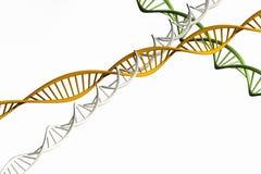 3d geef terug, geïsoleerd Model van verdraaide DNA-ketting Royalty-vrije Stock Foto