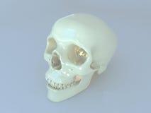 3D geef van een menselijke scull terug Royalty-vrije Stock Fotografie