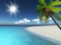 3D geef van een palm op een zandig strand terug Royalty-vrije Stock Afbeelding