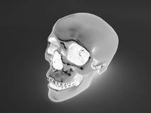 3D geef van een x-ray menselijke scull terug Stock Foto's