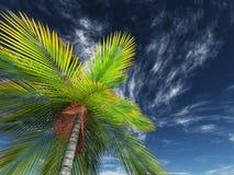 3D geef van het kijken terug omhoog een palm naar de hemel Royalty-vrije Stock Fotografie