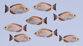 3d geef van Java Rabbitfish terug Stock Foto