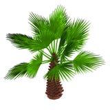 3d geef van palm terug vector illustratie