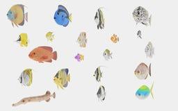 3D geef van Tropische Visseninzameling terug Royalty-vrije Stock Foto