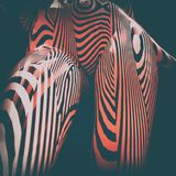 3d Geometric Stripped Pattern Illustration Art. Line Distortion Illusion Design, Abstract Woman Body Figure, Zebra Mannequin, Stripped Dummy Stock Images